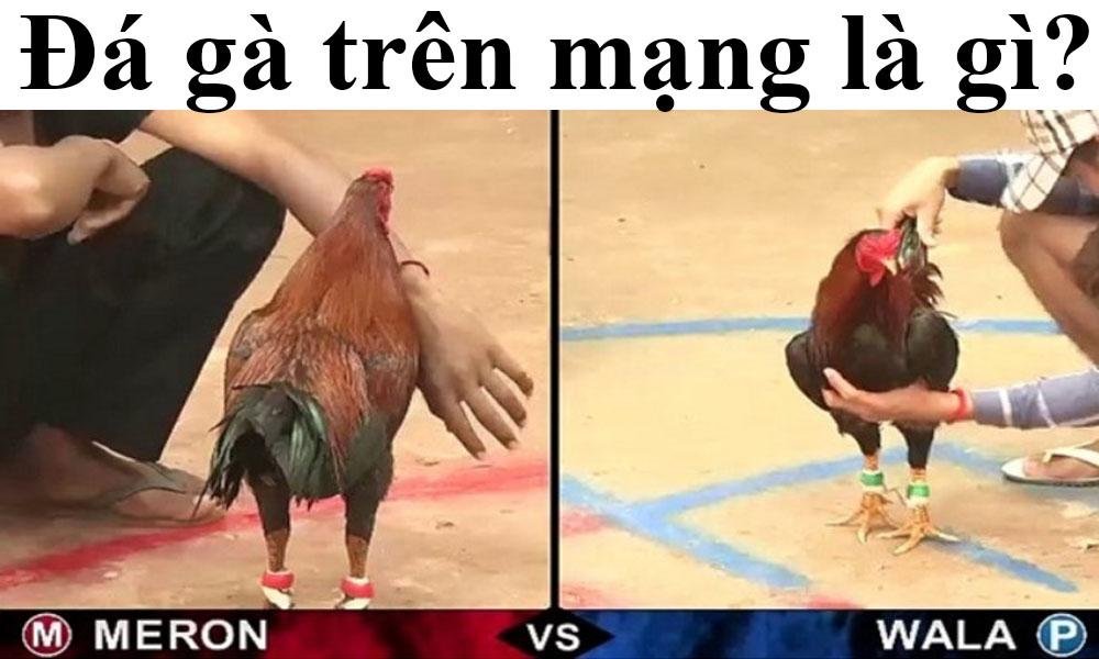 Đá gà trên mạng là gì